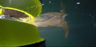 Seabin, un bidone galleggiante per ripulire il mare