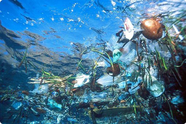 Il batterio che mangia la plastica